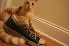 A kitten and his sneaker. Old and worn out blue shoe posed with an orange tabby cat who is looking towards the camera sitting down Stock Photo