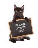 Kitten Holding Adopt Me Sign negra Fotografía de archivo libre de regalías