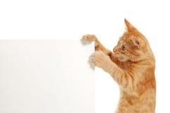 Kitten holding banner's corner Stock Photography