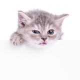 Kitten holding billboard Royalty Free Stock Images