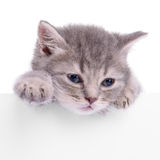 Kitten holding billboard Stock Photo
