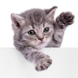 Kitten holding billboard Stock Photos