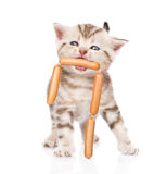 Kitten holding sausages in the mouth. isolated on white royalty free stock photos