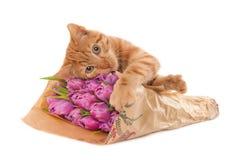 Kitten holding tulips Stock Image