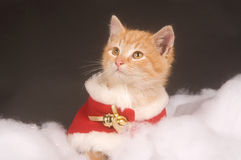 Kitten in holiday costume Royalty Free Stock Images