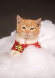 Kitten in holiday costume Royalty Free Stock Photos