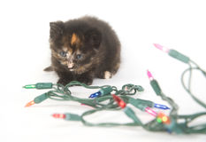 Kitten and holiday lights Royalty Free Stock Photography