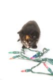 Kitten and holiday lights Royalty Free Stock Images