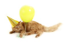 Kitten holiday play with cap green balloon Royalty Free Stock Photos