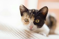 The kitten homesick. A little cat that want to play around Royalty Free Stock Images