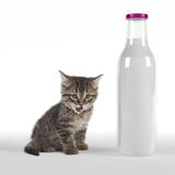 Kitten with huge bottle of milk Royalty Free Stock Photos