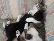 Kitten hugs. Kitty soothing baby kitten while sleeping Royalty Free Stock Photos