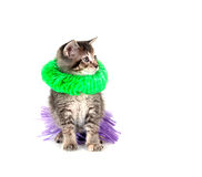 Kitten with hula skirt and green lay Stock Image