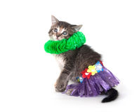 Kitten with hula skirt and green lay Stock Images