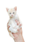 Kitten in human hands Royalty Free Stock Photos