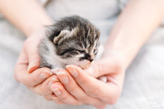 Kitten in human hands Stock Photos