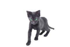 Kitten hunting Stock Photography