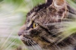Kitten hunts Stock Photography