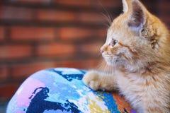 Kitten II Stock Photo