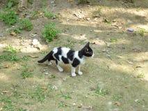 Kitten. Image of a nice Indian kitten playing on backyard Royalty Free Stock Photography