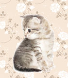 Kitten. Imitation of watercolor painting Royalty Free Stock Photography