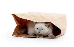 Free Kitten In A Bag Royalty Free Stock Photo - 41766615