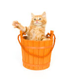 Kitten In An Orange Barrel Royalty Free Stock Images