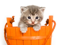 Kitten In An Orange Bucket Royalty Free Stock Photos