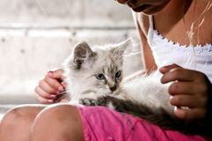 Kitten In Arms Stock Photography