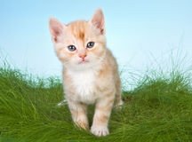 Free Kitten In Grass Stock Photography - 5793162