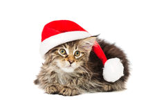 Free Kitten In Red  Hat Royalty Free Stock Image - 12553926