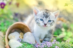 Kitten In The Garden With Flowers On Background Stock Images