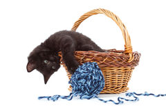Kitten inside of basket playing with yarn Stock Images