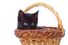 Kitten inside of basket Stock Photo