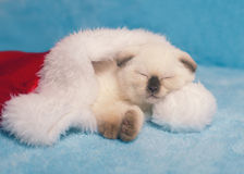 Kitten inside Santa's hat Royalty Free Stock Photos