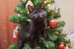 Kitten invalid, with one eye on the Christmas tree Royalty Free Stock Images