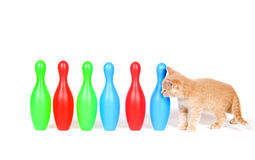 Kitten investigating toy bowling pins. Cute kitten checks out a row of toy bowling pins on white background royalty free stock photos
