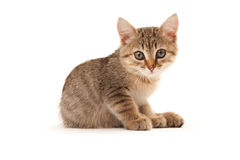 Kitten isoalted on white Stock Image