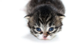 Kitten isolated closeup Stock Photo