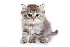 Kitten isolated on white Stock Photo