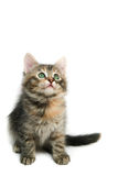 Kitten - isolated on white Stock Photo