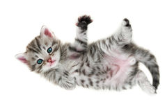 Kitten - isolated on white Stock Images