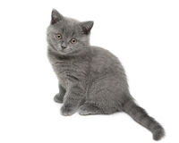 Kitten isolated on white background close-up Royalty Free Stock Image