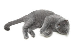 Kitten isolated on white background - top view. Royalty Free Stock Photo