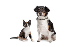 Kitten and Jack Russel Terrier Stock Image