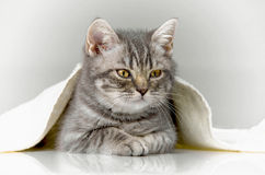 Kitten, joy in the house Stock Images