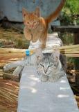 Kitten jump. A red kitten jumps over through grey stock photo