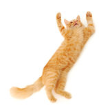Kitten jumping Royalty Free Stock Photos