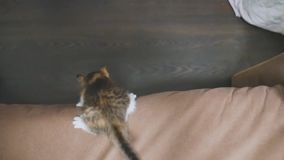Kitten jumping falls from on the couch slow motion video. kitten playing concept two kitten and a lifestyle cat. Kitten jumping falls from on the couch slow stock video footage