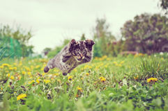 Kitten is jumping Stock Photo